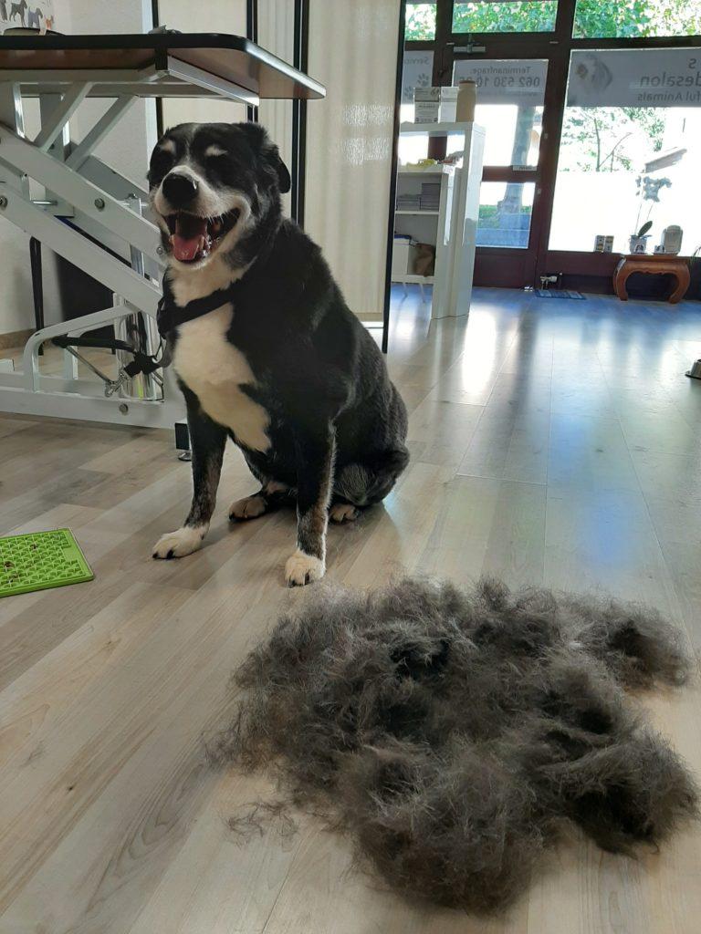 Caro's Hundesalon Beautiful Animals Unterwolle rausbürsten